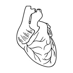 Human heart icon in outline style isolated on white background. Human organs symbol stock vector illustration.