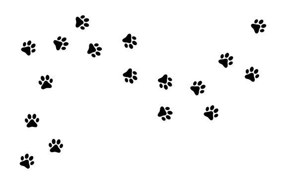 Fußspuren - Tiere - Fußabdrücke