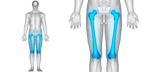 Human Body Bone Joint Pains (Femur Bone joints)