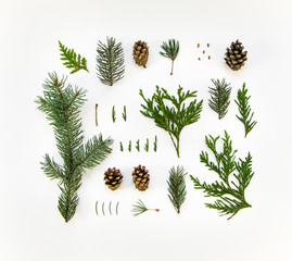 Creative natural layout of winter plants on white background. Flat lay, top view