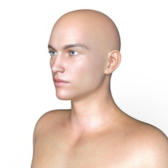 男性の頭部