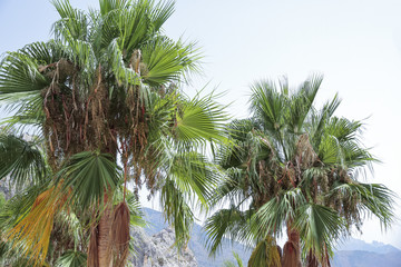 palm trees in guadalest