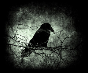 Grunge scary halloween mystical wallpaper with crow. Dark distressed texture background