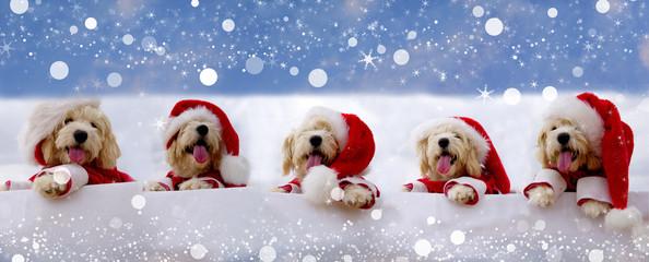 christmas puppys