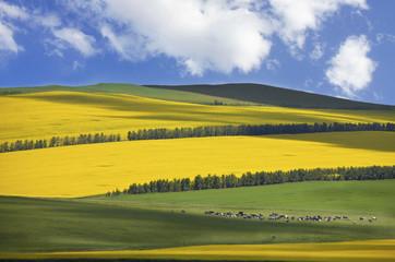 Inner Mongolia grassland Hulun Bei
