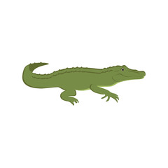 Green crocodile vector