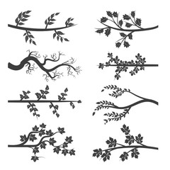 Tree branches with leaves silhouette isolated on white background. Vector illustration