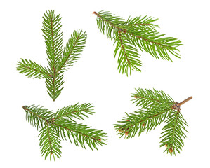 Set of fir tree branches isolated on a white background