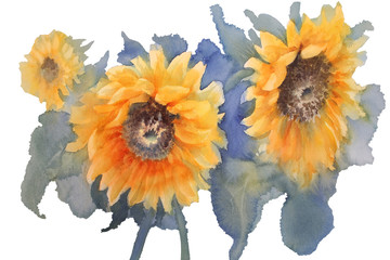 sunflowers on green background watercolor isolated