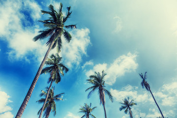 palm trees on a beautiful clouds