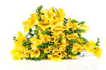 Yellow freesia isolated on white background