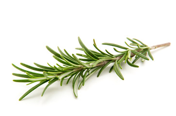 Twig of rosemary on a white background