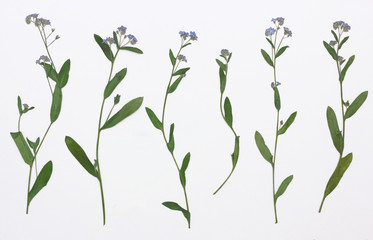 Picture of dried flowers in several variants
