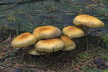 Group of mushrooms growing