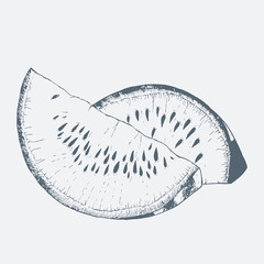 Watermelon sketch hand drawn. Vector Illustration.