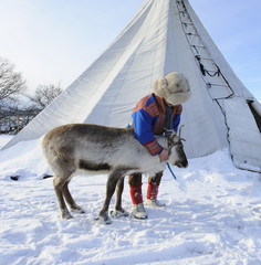 Traditional Sami reindeer-skin tents (lappish yurts) in Tromso .reindeer breeder