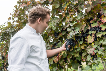 Chef is inspecting a supplier vineyard for quality control