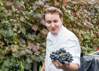 Chef visiting vineyard being satisfied with the quality of the grapes that will be used to make balsamic vinegar