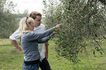 Chef and woman owner of olive plantation checking quality of the