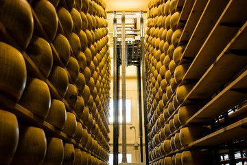 Robot turning cheese in shelves of Italian Parmesan cheese factory