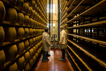 Worker and food inspector in parmesan cheese factory, Italy