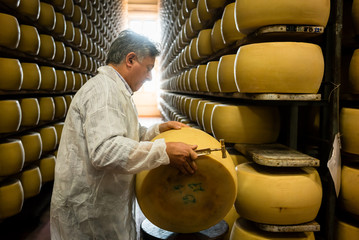 Worker testing quality of cheese loaf with hammer in parmesan food factory
