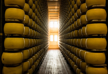 Many wheels of Parmesan cheese aging on shelves in factory warehouse
