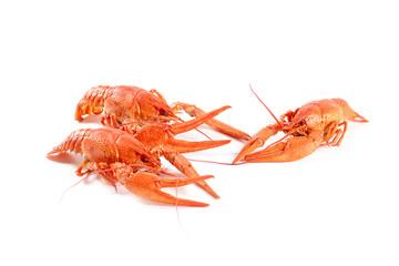 Freshly caught wonderful crayfish boiled for food