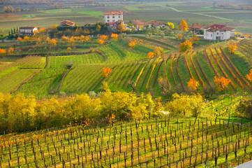 Collio Wine region, Friuli Venezia Giulia, Italy