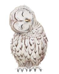 cute white owl
