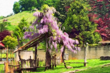 Pergola overgrown with flowering wisteria.  Oil painting effect.