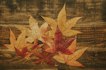Beautiful leaves from the autumn