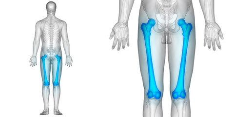 Human Body Bone Joint Pains (Femur Bone joints Posterior view)