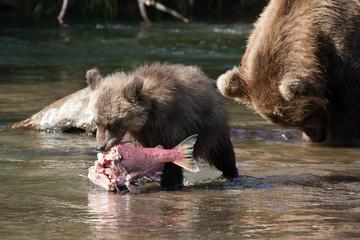 cute cub eats big fish salmon