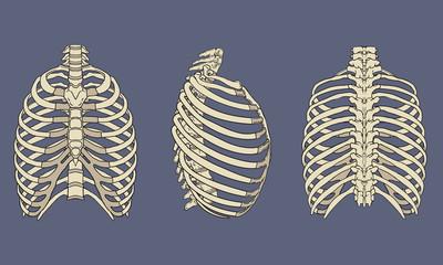 Human Rib Cage Skeletal Anatomy Pack