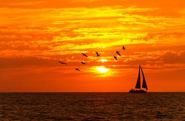 Ocean Sunset Sailboat Birds