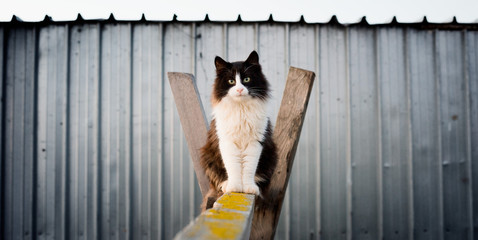 Black and white cat sitting on wooden beam looking for you