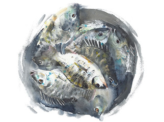 Fish in a bucket handmade watercolor painting isolated on white