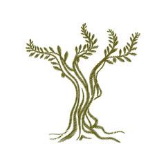 tree olive branch sketch icon vector illustration eps 10