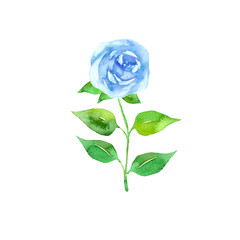 blue rose watercolor. Floral design element isolated on white background. Hand drawn watercolor style