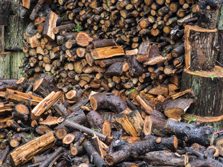 Pile of wet firewood