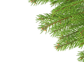 Christmas tree branches border over white