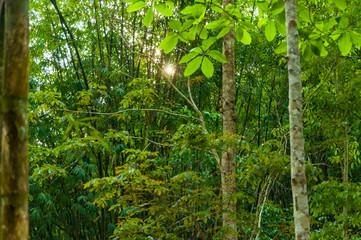 Tropical Rainforest Landscape View with Sunlight, Kanchanaburi,