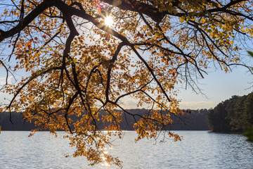 Maple tree leaves with sun reflection on lake.