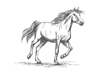 Horse sketch with running racehorse