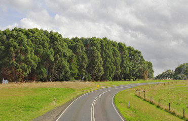 The road with trees