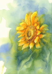 sunflower on green background watercolor