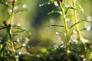 Wall Mural - morning sunlight on grass background with beautiful bokeh