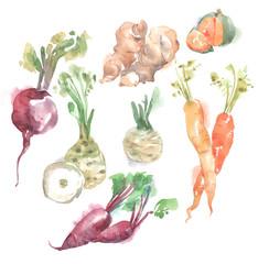 vegetables watercolor illustration