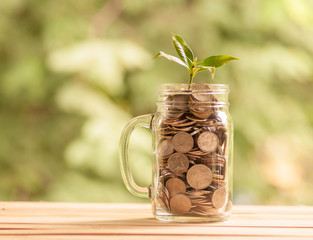 Little tree growing on coins in glass jar with nature background, Money saving concept